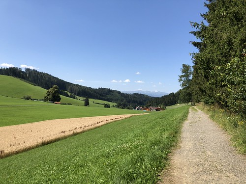 2018.07.19 019 Wipfelwanderweg Rachau