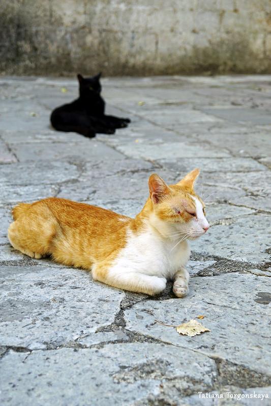 Коты, отдыхающие на площади Кино