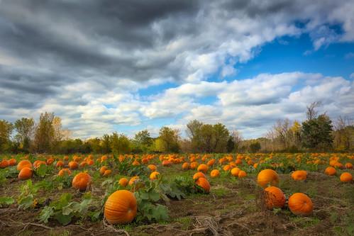 2018 autumnstuff hamilton pumpkin img7573e pumpkinpatch fall field orange