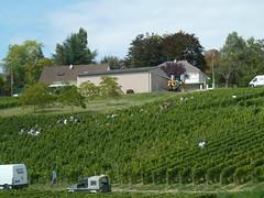 Sancerre les vignobles (1)