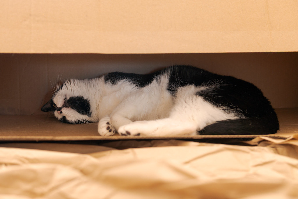 Our cat Boo sleeps in a long thin cardboard box turned on its side