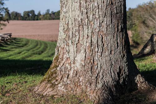 confederategeneral felixzollicoffer millspringbattlefield pulaskicounty zollicofferpark zollietree battlefield oaktree whiteoaktree