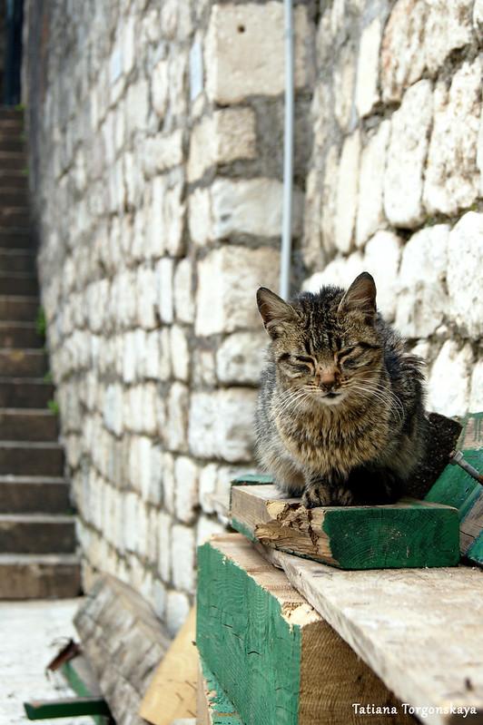 Кот на площади Дров