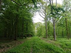 Forêt de Mormal - Photo of Jolimetz
