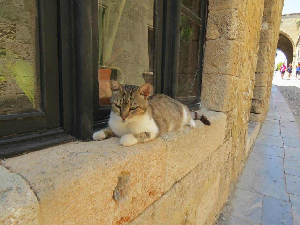 Котик на улице рыцарей
