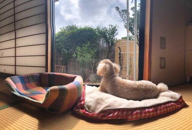 寒さ対策をして日光浴をする犬