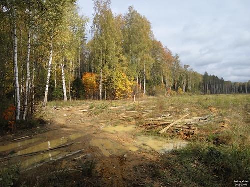 К востоку от Новониколаевка