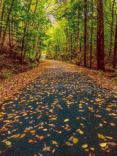 autumn fall leaves trees trail railtrail hike sullivancounty nature landscape iphone6s
