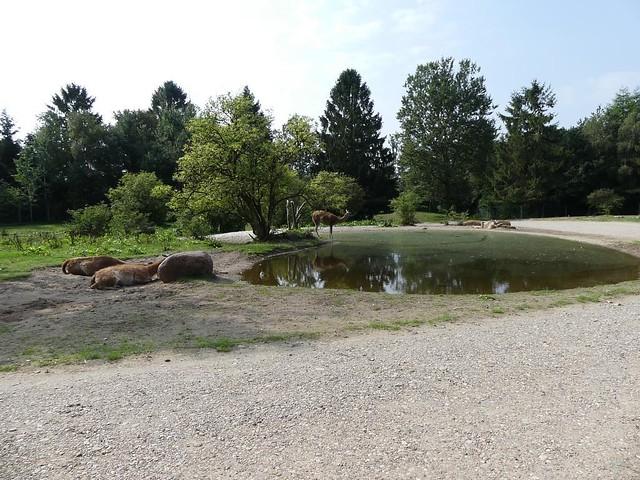 Anlage für Guanako, Wasserschwein und Nandu, Zoo Givskud