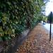 Leaves on the pavement - Priory Road, Edgbaston