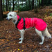 Teddy shows off his new raincoat