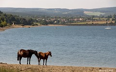 Les Chevaux du Lac - Photo of Saint-Flour-de-Mercoire