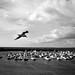 L'envol de la mouette  -  The flight of the gull by Philippe Haumesser (+ 6000 000 view)