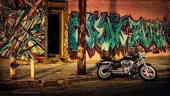 Harley . . . #harleydavidson #motorcycle #graffitiart #bushwick #streetshot #streetart #roughriders #bike #motorbike #streetscene #brooklynstreets #chrislorddotnyc #chrislord #pixielatedpixels #nycphotographer #creativeimages #artphotography #everything_e