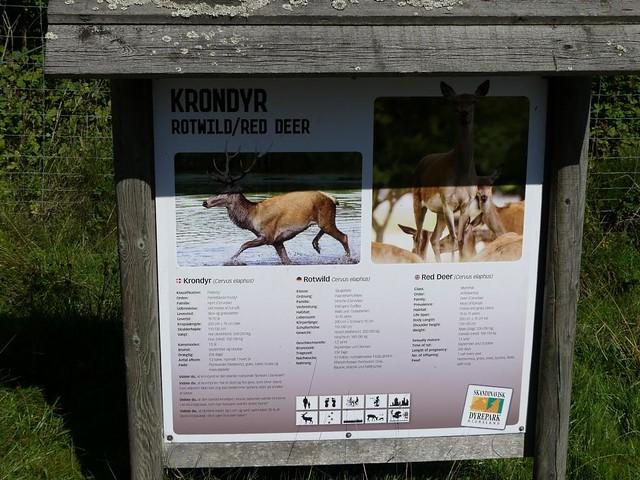 Rotwild, Skandinavisk Dyrepark Kolind