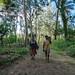 49450-008: Energy Access Project in Vanuatu