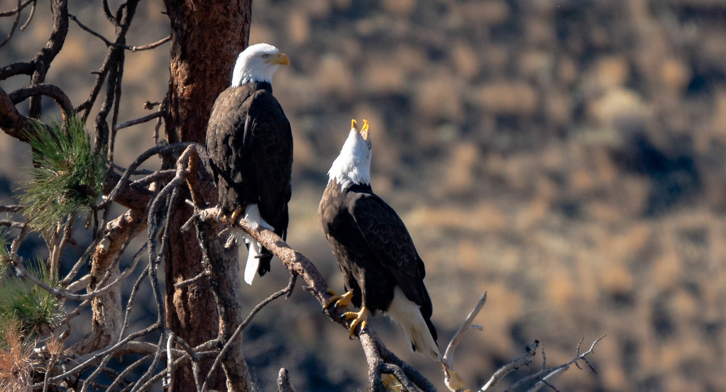 Eagle 3 (1 of 1)