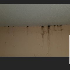 Heavy infestation of bed bugs in a home in #Charleston. This infestation could have potentially been ongoing for well over a year unchecked and ignored! #pestcontrol #bedbugs #residentialpestcontol