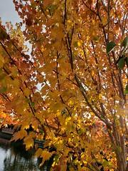 Autumn time.