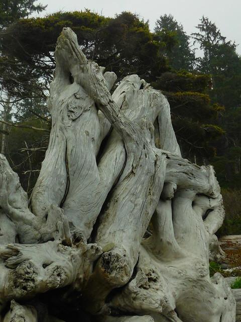Rialto Beach Driftwood Sculptures, Nikon COOLPIX B500