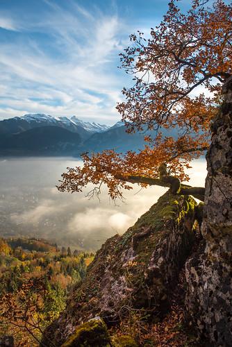 Quand Novembre de brume inonde le ciel bleu, Que le bois tourbillonne et qu'il neige des feuilles...