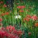 Red & White by enebisu