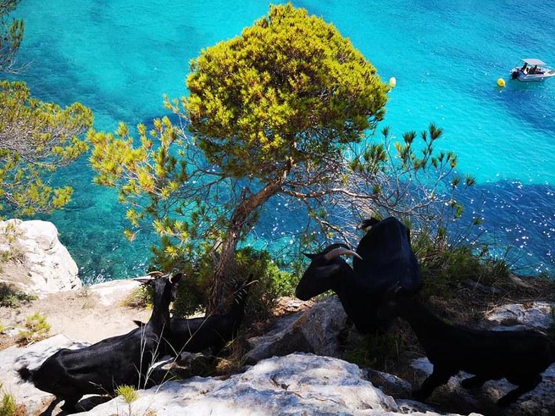 ViaggiAlbatros | Minorca la Gipsy | 2018