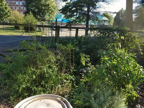 Mid-October Gardening