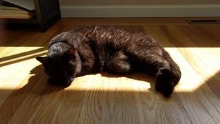 Soaking up the last bits of #caturday morning sun