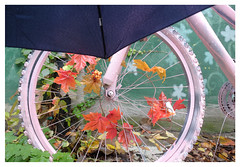 rainy day autumn bike