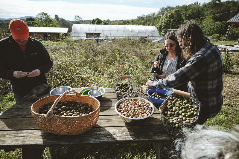 Workshop participants prepare to process hickory nuts gathered on site. Hickory nuts are a traditionally important source of fat and protein over the winter. Afton, VA  11/17/2018 Photo credit: Ézé Amos