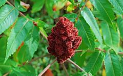 Funky raspberries