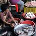 fish -  Mae Klong Railway Market (Talad Rom Hub), Bangkok, Thailand 2018 by Dis da fi we