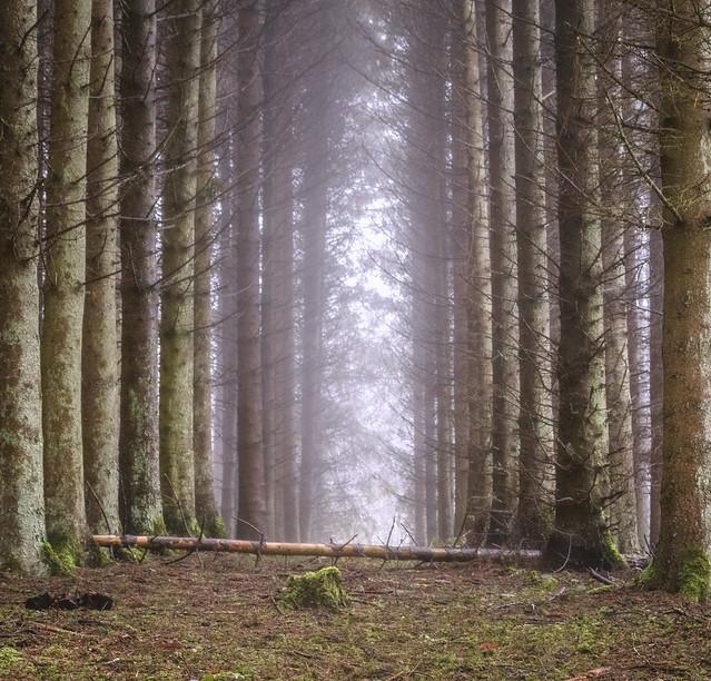 Sleeping Woodland Pass