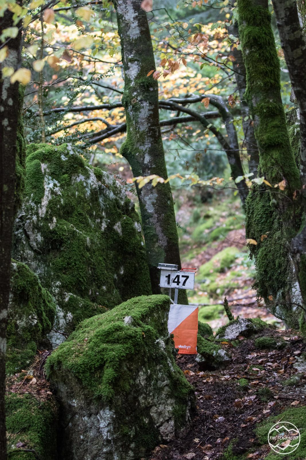 ROA 2018- Bois des granges (149)