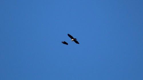 soaring3