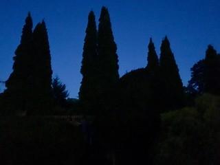 Random Photos! - Silhouette Forest.