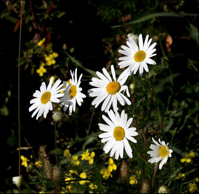 Касарги 3785 Flores.