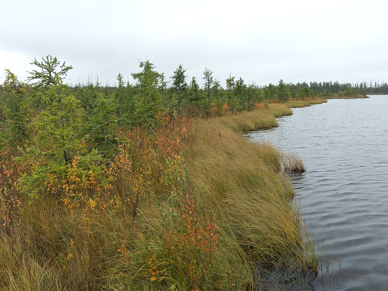 Prince Albert National Park: Boundary Bog Trail