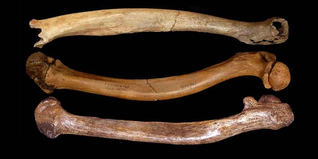 fémurs-fléchis-premiers-humains-consanguinité