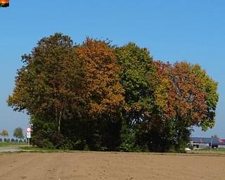 Herbst in Oberschwaben -hier im unteren Illertal in Süddeutschland .-. Autumn in Upper Swabia -here in the lower Illertal in southern Germany .-.  Automne en Haute-Souabe -ici dans le Bas Illertal dans le sud de l'Allemagne