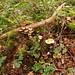 Ferns & Fungi