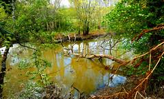 Le ruisseau, dans un frisson, casse la branche. - Photo of Vendays-Montalivet