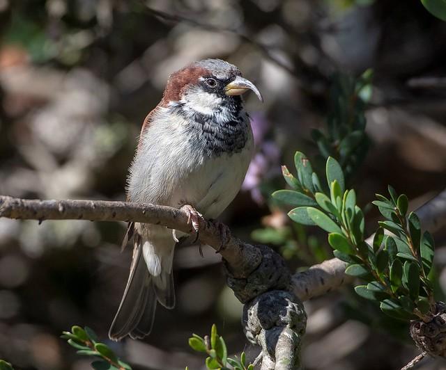 Cyrano de Birdgerac