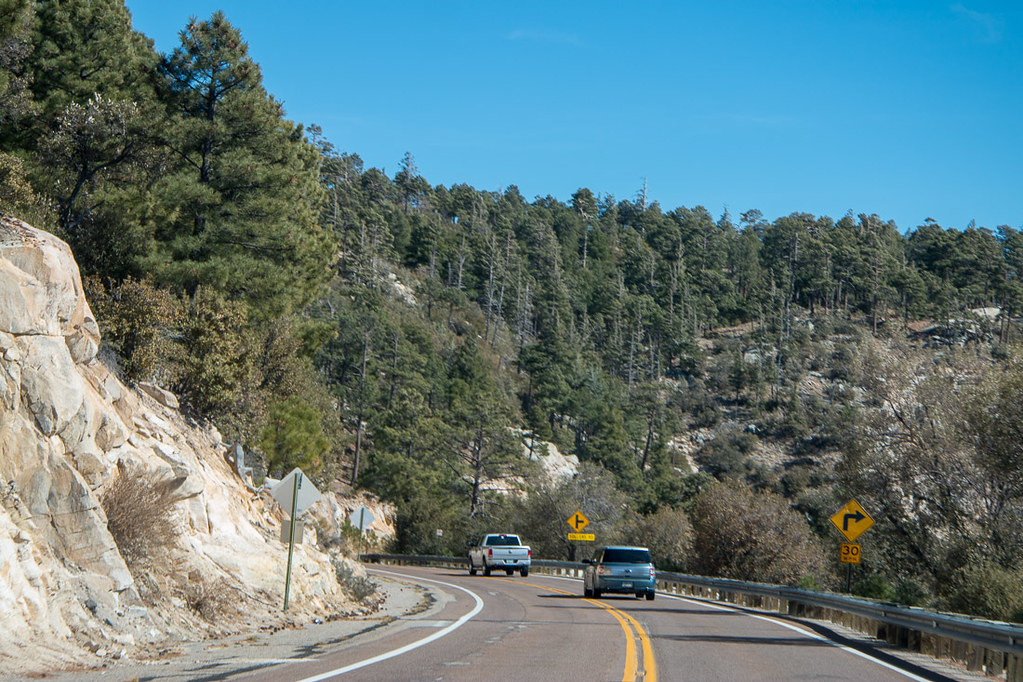 Evergreen trees on Mt. Lemmon Scenic Byway
