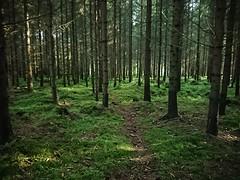 Tynn I Mose - Prestegårdsskogen