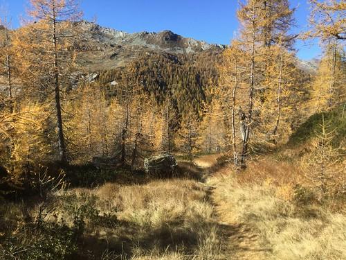 Near Alpe Sfii (TI)