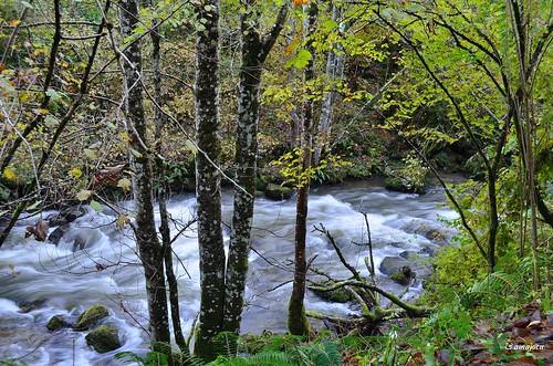 Río Alba  (Asturias)  Spain