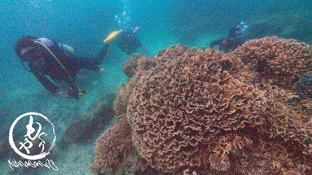 バラのようでこの珊瑚好き。