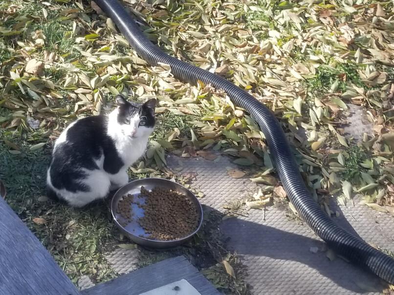 20181018.dadcat.blackandwhite